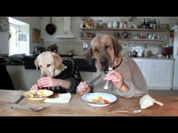 TWO DOGS DINING AT BUSY RESTAURANT